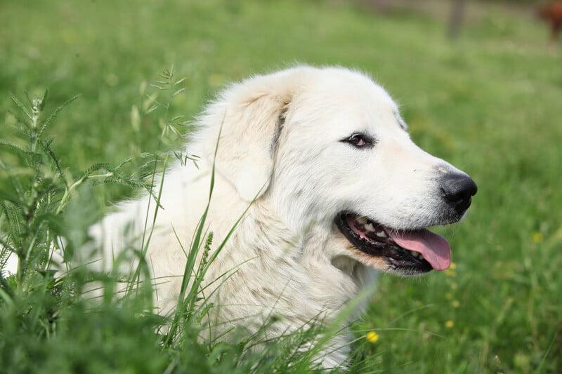 Albemarle NC Pet Dental Care